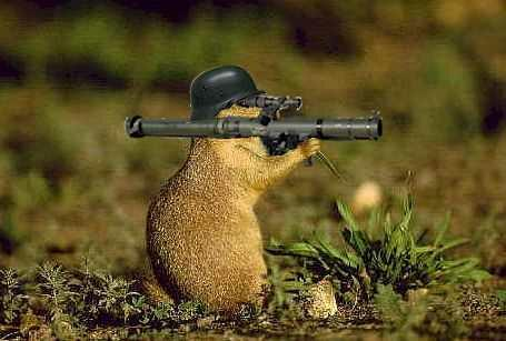 armed-squirrel.jpg