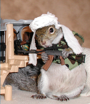 taliban squirrel