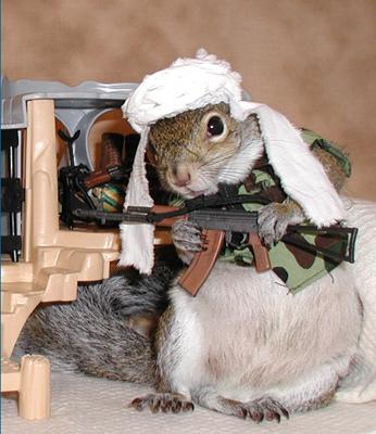 talibansquirrel.jpg